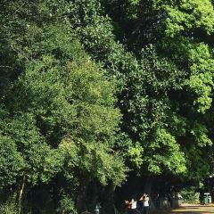 肯塔利亞國家公園張用戶圖片