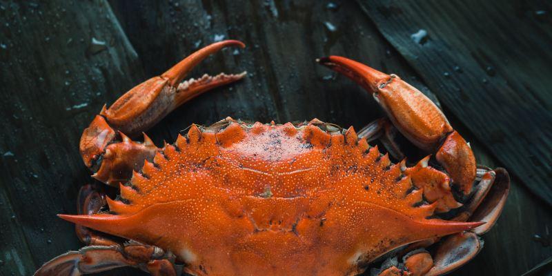 【2020大閘蟹】蟹季懶人包,食大閘蟹點揀、點蒸好?