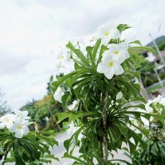 普吉島植物園用戶圖片