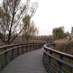 Zhengdong New District Wetland Park User Photo