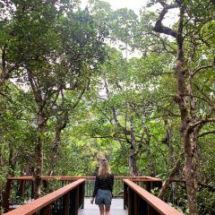 Daintree Rainforest User Photo