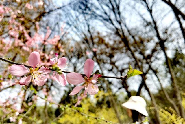 란저우 식물원