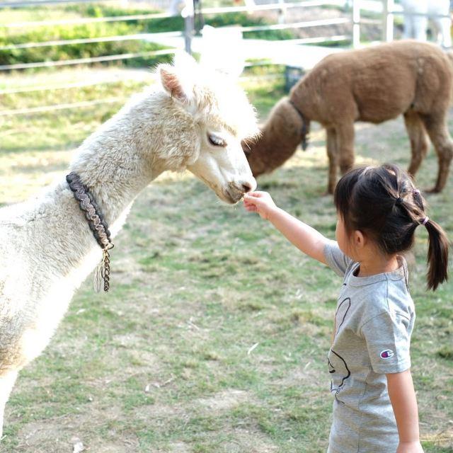 【親子農場】10個親子農莊好去處⛺ 士多啤梨園、探草泥馬、豪華露營