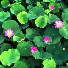 Napaxigu Shatan Shui World User Photo