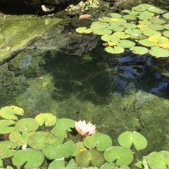 白岩湖公園用戶圖片