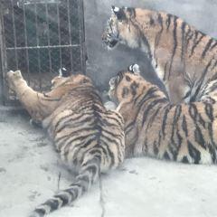 Jinhua Zoo User Photo