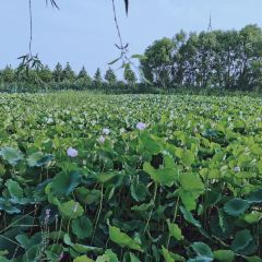 Canal Wetland Park User Photo