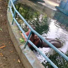 淹城野生動物世界用戶圖片