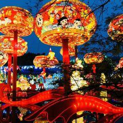 쯔궁채색등공원 여행 사진