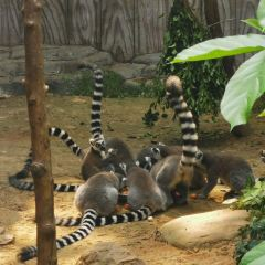 Nanning Zoo User Photo
