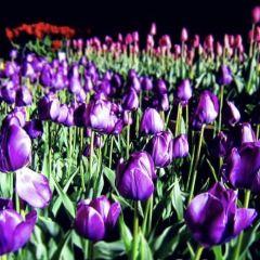 Floriade用戶圖片