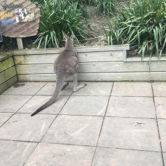 Wellington Zoo User Photo