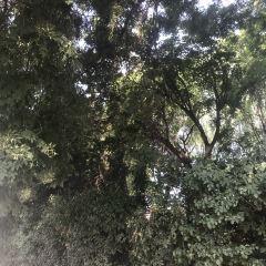 Nanhu Ecological Garden User Photo