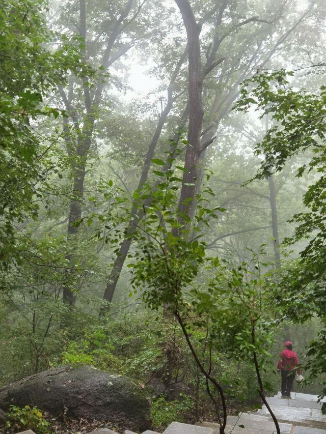 朱雀山森林公園