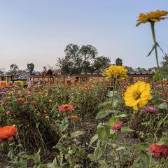 木蘭花鄉用戶圖片