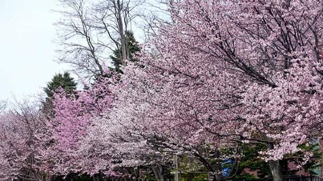 나카지마 공원