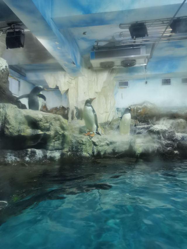 창사(장사) 해양세계(하이양스제)