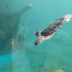 Turtle National Reserve Areas User Photo