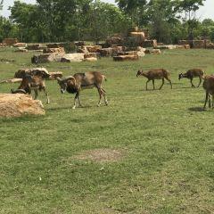 난통 삼림 야생동물원 여행 사진
