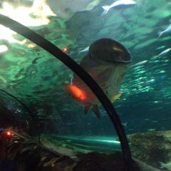Sea Life Sydney Aquarium User Photo