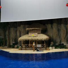 北京海洋館用戶圖片