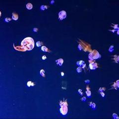 Hefei Ocean World User Photo
