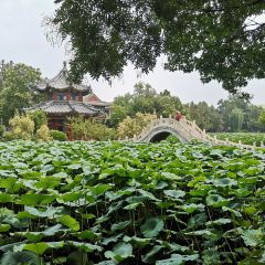 Ancient Lotus Flower Pond User Photo