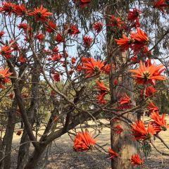 Johannesburg Botanical Garden User Photo