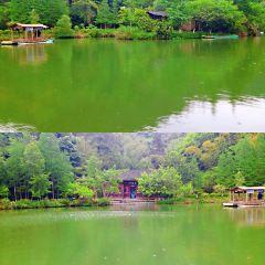 漓江古東景區用戶圖片