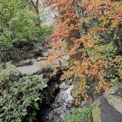 Ruiyun Mountain Forest Park User Photo