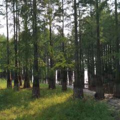 Mochou Lake Park User Photo
