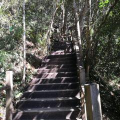 尖峰嶺國家森林公園用戶圖片