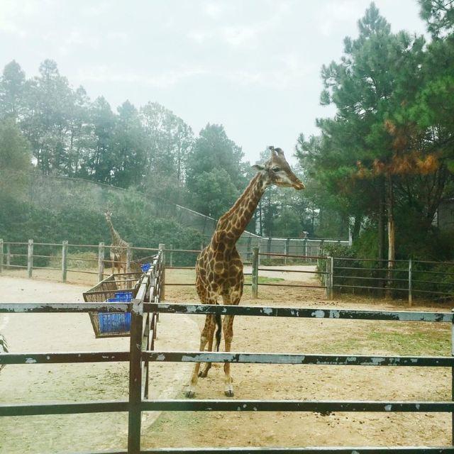 창사 생태 동물원