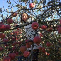 Zhenshun Apple Orchard User Photo
