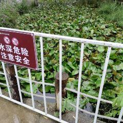 Fuyang Ecological Park User Photo
