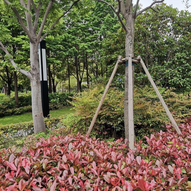Baodugu National Forest Park