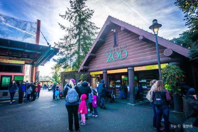 Zoo Lights in December: 9 Great Holiday Light Festivals