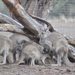 Kangaroo Island Wildlife Park User Photo