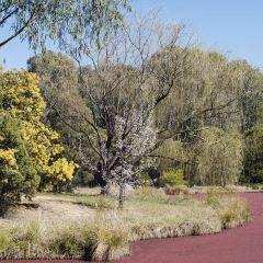 聯邦公園用戶圖片