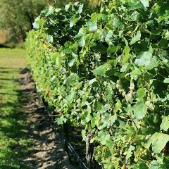 Chard Farm Vineyard User Photo