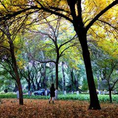 城市人工森林公園用戶圖片