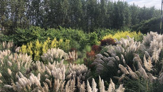 最适宜的温度加上全年360天的阳光明媚,邛海湿地的自然美是不