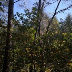 아산국가산림공원 여행 사진