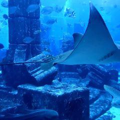 The Lost Chambers Aquarium User Photo