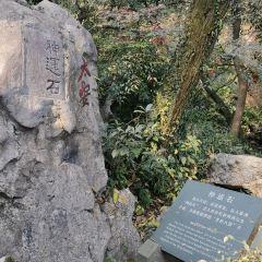 龍井茶田用戶圖片
