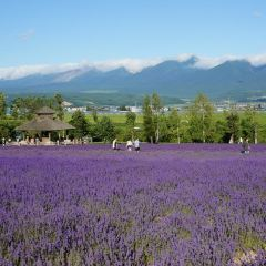 富田農場用戶圖片