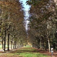 楓丹白露森林用戶圖片