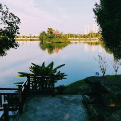 中國揚子鱷景區用戶圖片
