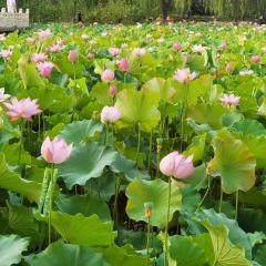 Yuxi Park User Photo