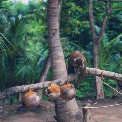 At Hill Safari Krabi User Photo